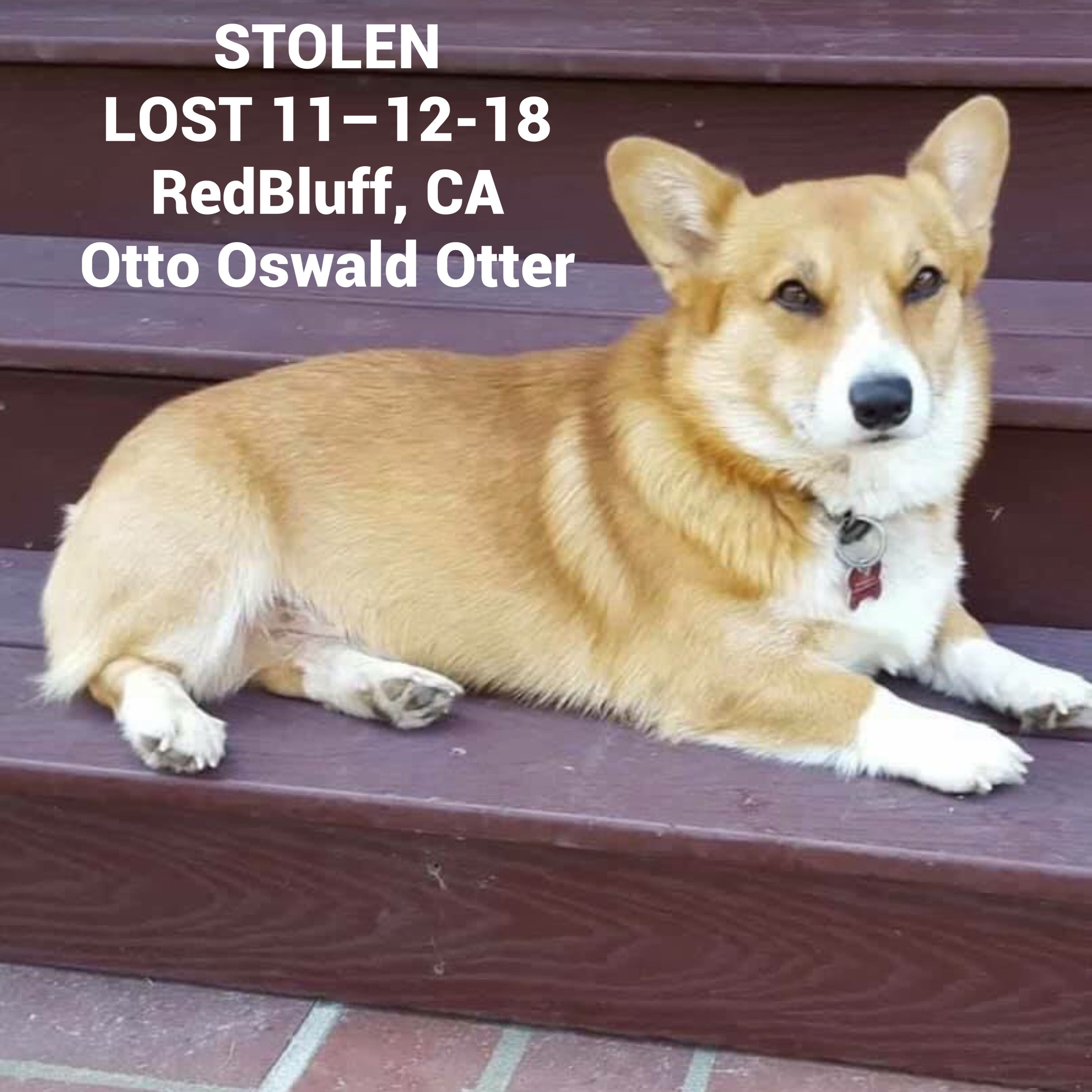 Pin On Lost And Found Pets
