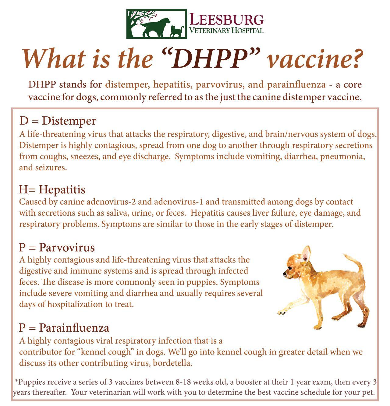 canine distemper dhpp vaccine