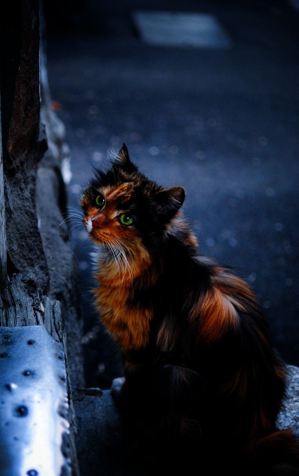 Awesome Beautiful Cats For Sale In Pakistan Cats Animals Beautiful Cats Pictures