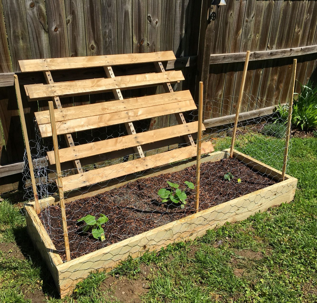 Growing Zucchini On A Trellis: Pallet Trellis For Squash And Zucchini. DIY Garden Box