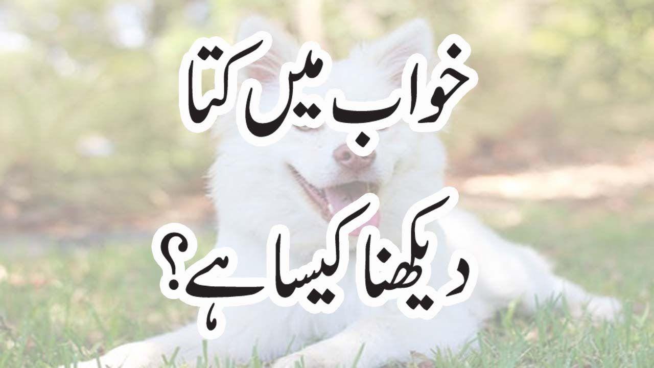 Khawab Ki Tabeer || Khawab Mein Kuta Dekhna Kesa Hy