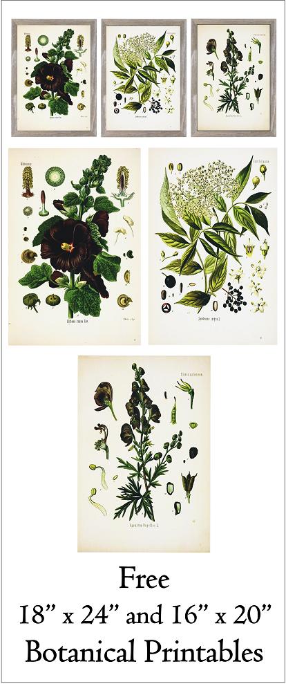 Free 18″ x 24″ and 16″ x 20″ Printable Floral Botanical Prints ...