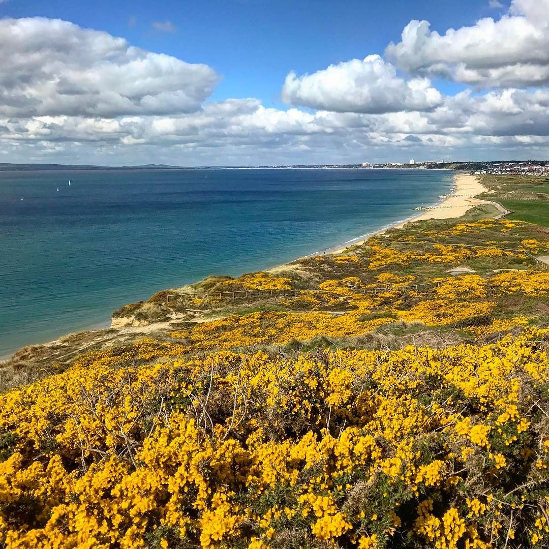 A view from hengisbury head towards #bournemouth today  #greatbritain #Dorset #coast #yellowflowers #clouds #bluesky  #iphone7