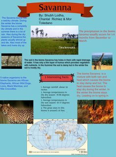 African Savanna Ecosystem Climate Savanna Biome Projects To Try