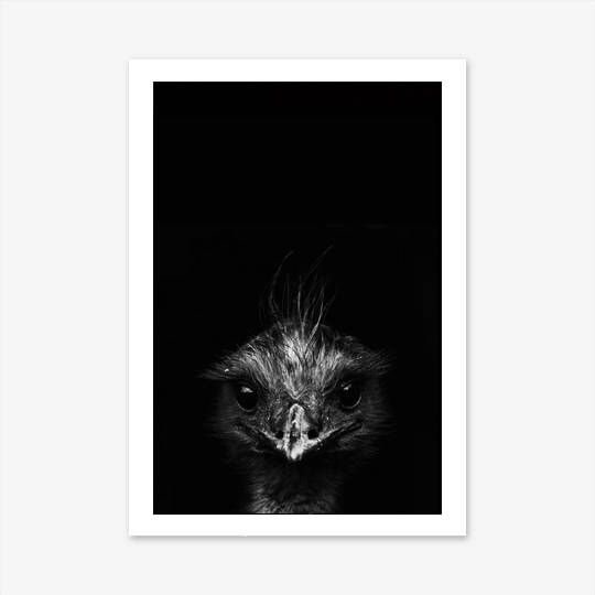 Photography prints emu print black and white wall art animal prints for nursery modern wall art australian native bird print homedecorideas