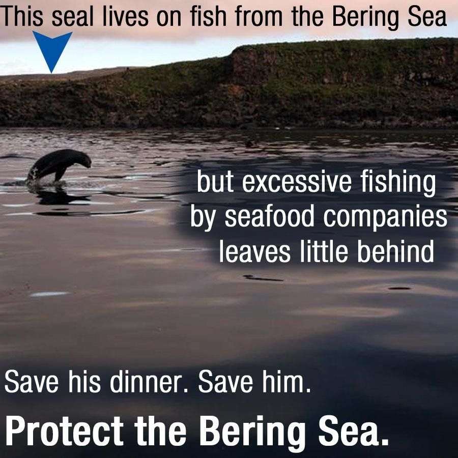 Hey guys and gals…Greenpeace is doing a lotta leg work for this issue…but we need ten more K (17 days left; 39,178 with a goal of 50,000) signatures please; Save whales, sea lions, and polar bears: Protect the Bering Sea! | Sunset Daily