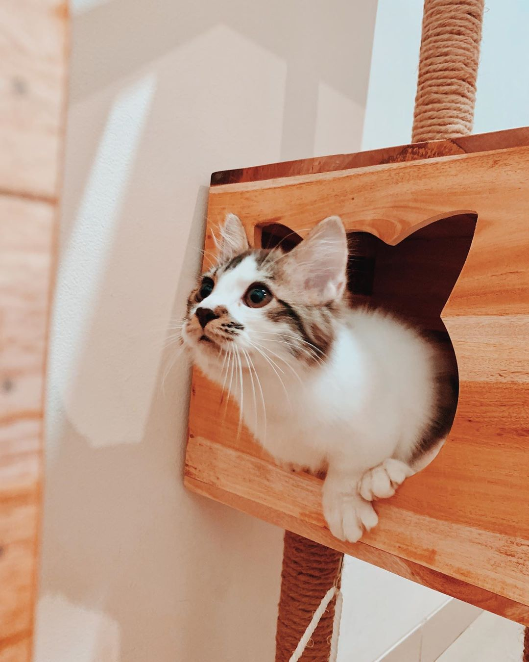 Itu Qimmy Beneran Bukan Sih Cat Cats Catsofinstagram Cats Of Instagram Cats Of World Cat Features Catlover Munchkin Kitten Cat Day Cats And Kittens