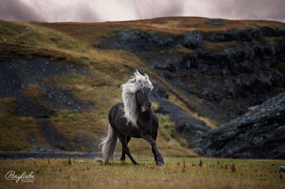 """Ponyliebe Pferdefotografie posted to Instagram: """"Life is like photography – you use the negatives to develop."""" Dieser Spruch hängt seit Jahren in mei…"""