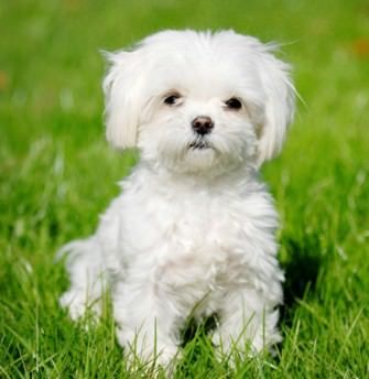 Small Dog Breeds Types Of Small Dogs List Of Smallest Dog
