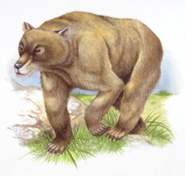 Tomarctus Bear Dogs