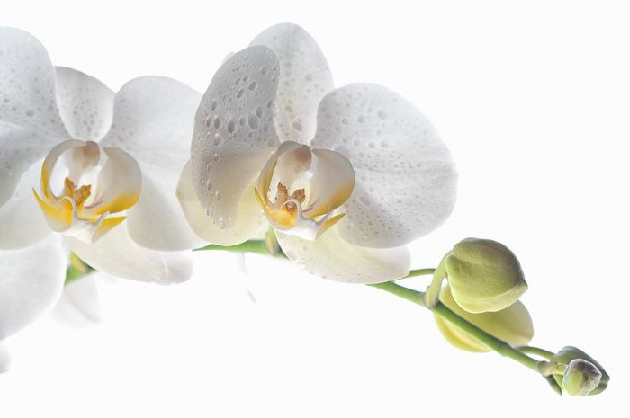 Orchid 2 by Marianne Donahoe on Capture My Arizona // Orchid 2
