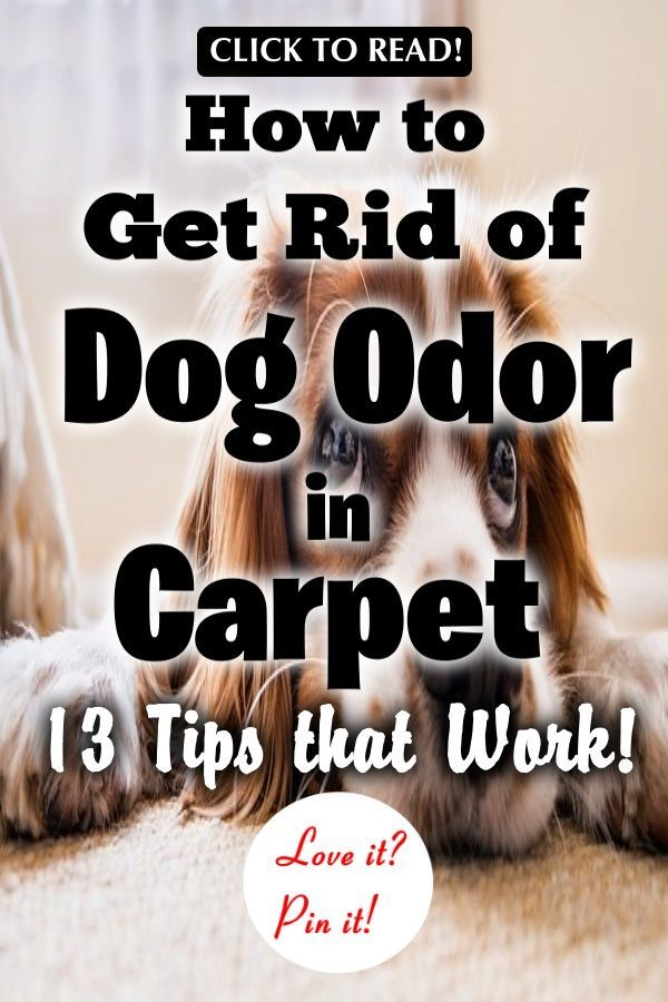 how to get rid of dog urine smell from carpets