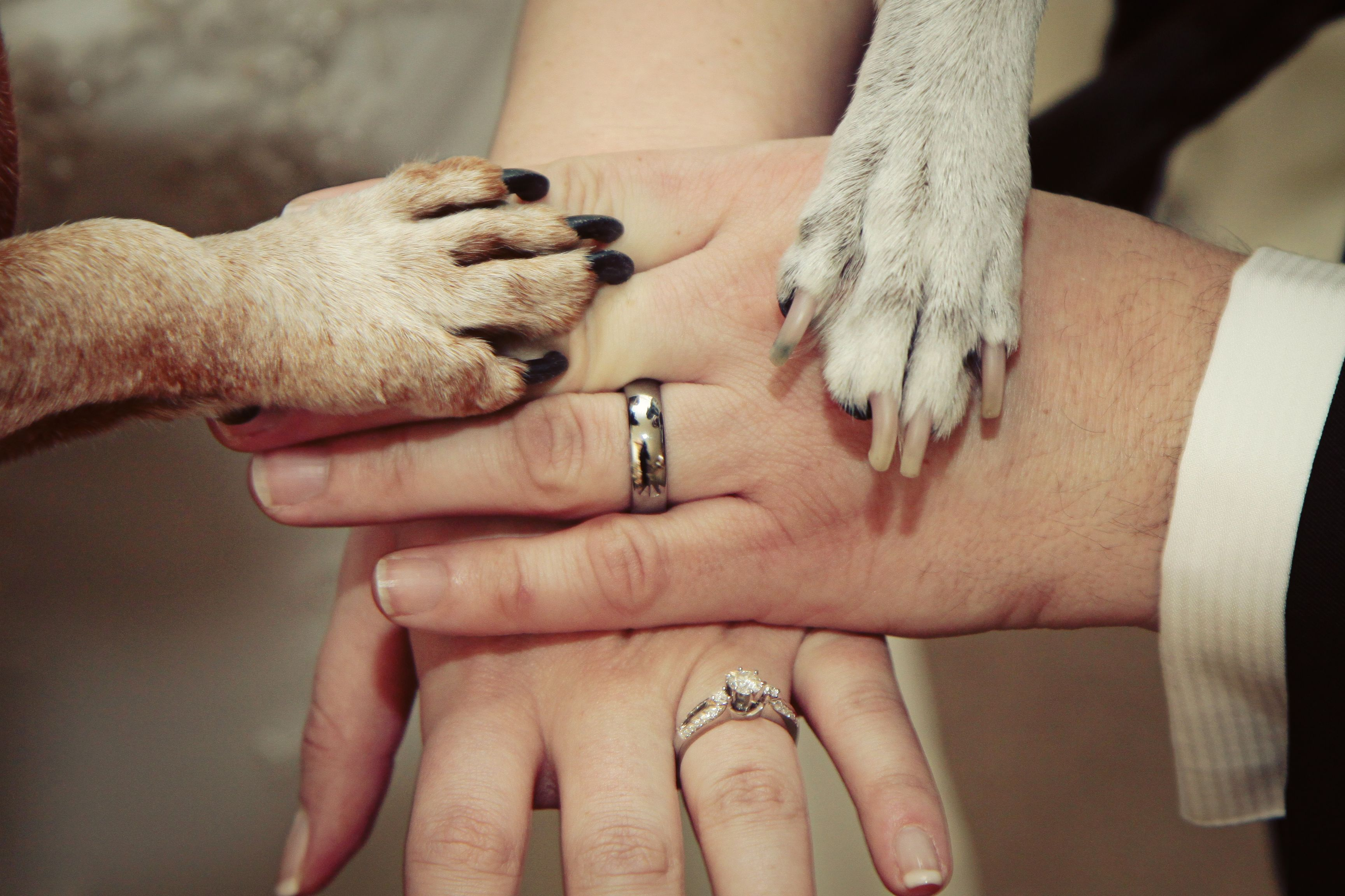 Wedding with dogs click chicks photography blog pet crafts