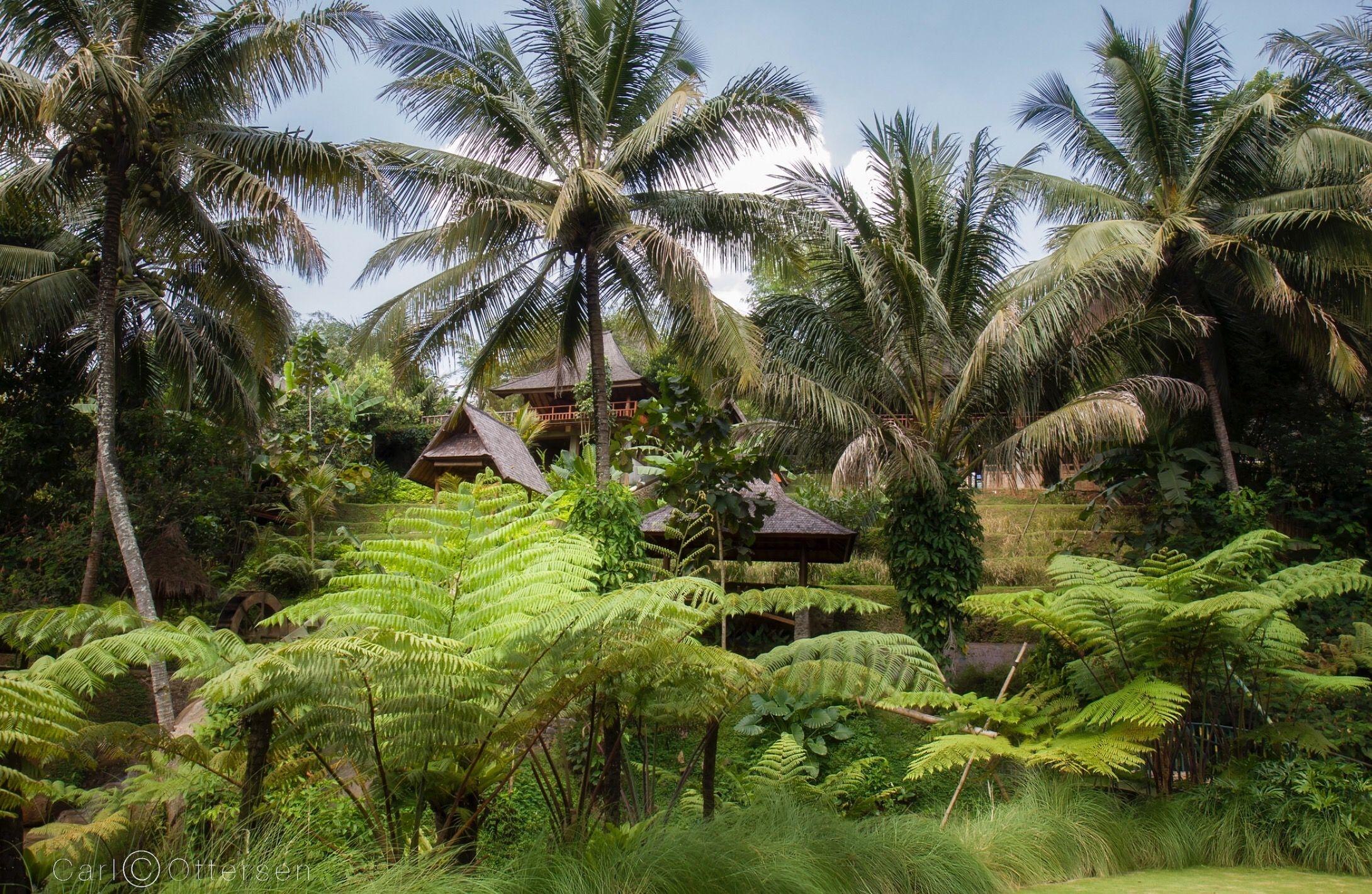 130803 011 ToNagrek Great places, Garden, Indonesia