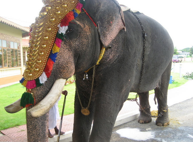 Strong Elephant Elephant Images Elephant Tourist Places You can download 455*800 of india temple now. www pinterest co kr
