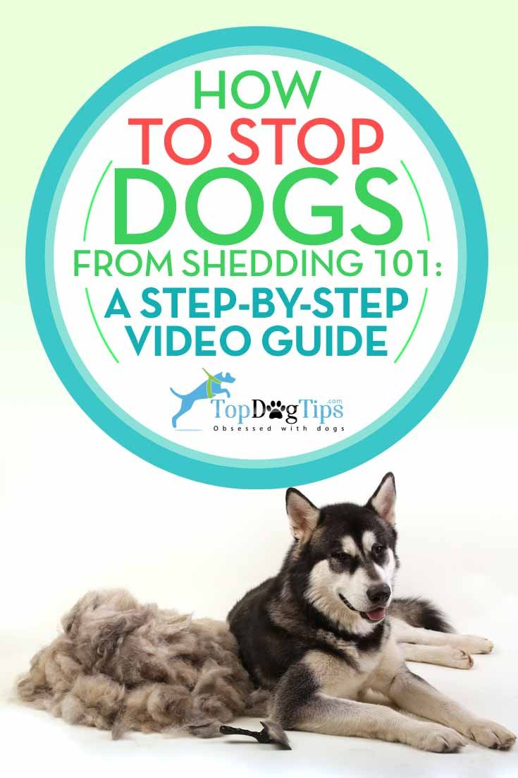 How To Stop Dogs From Shedding Dog Shedding Pet Shed