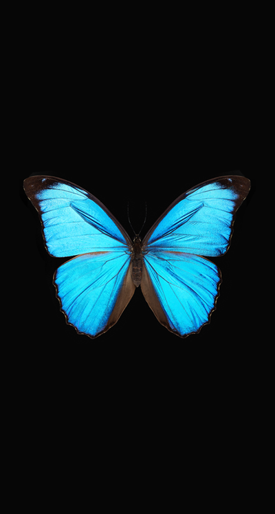 Pin On Disney Phone Wallpaper In 2020 Blue Wallpaper Iphone Blue Butterfly Wallpaper Butterfly Wallpaper Iphone