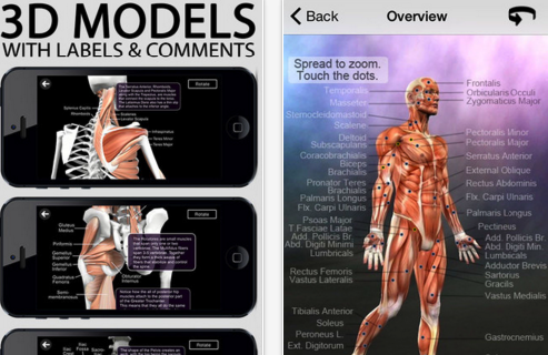 7 of The Best iPad Apps for learning Human Anatomy in 3D | Human ...