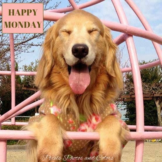Image result for happy new week pets