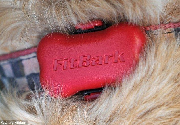 'Fitbark' claims to be the way to get your FAT FIDO fitter  | Daily Mail Online
