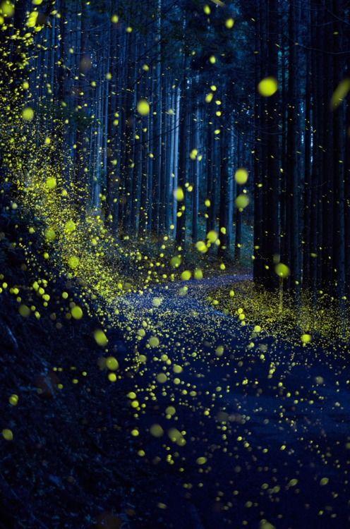 Fireflies( Hotaru)