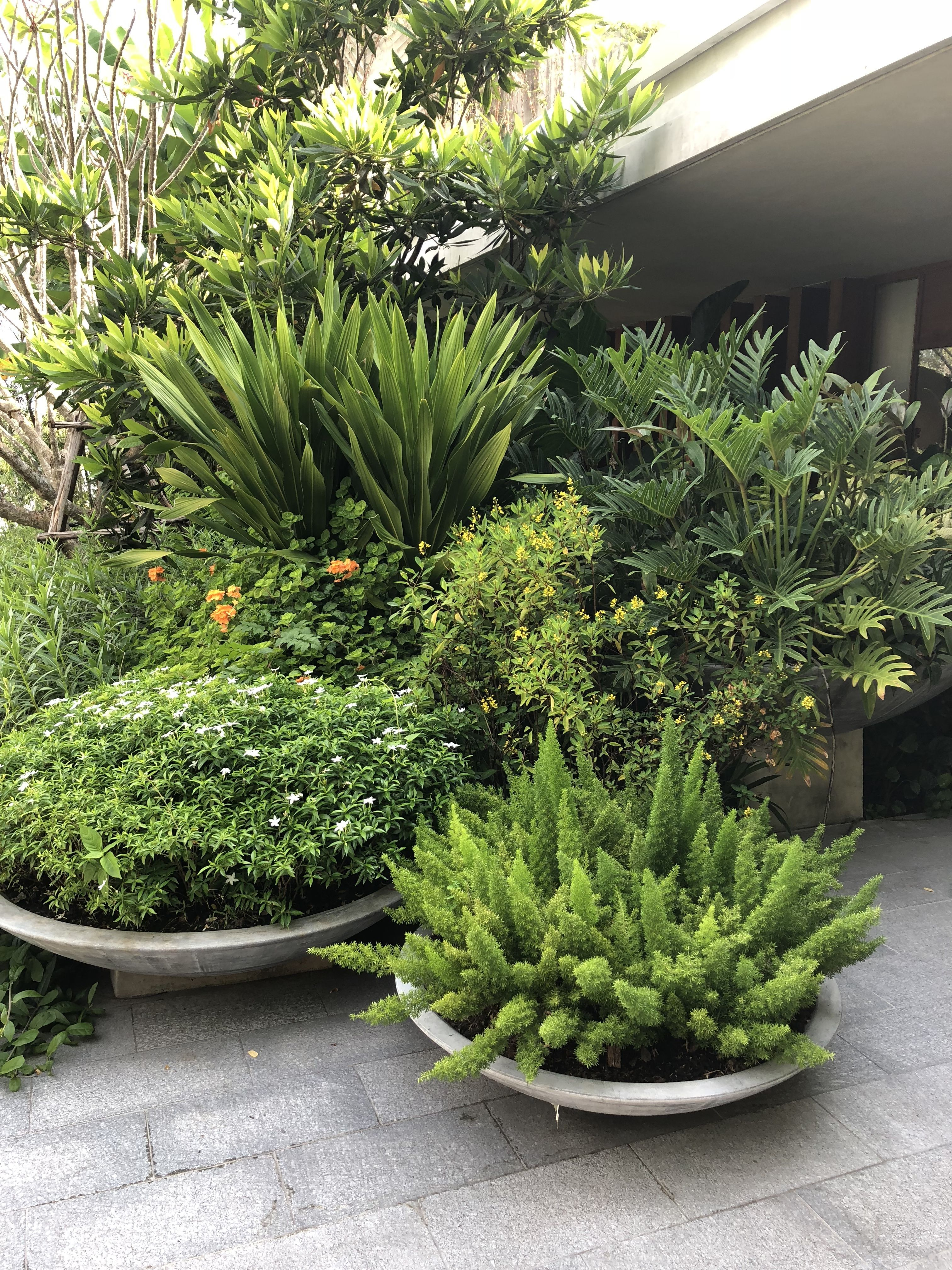 GARDEN (patio top step planters) I want to give a semi tropical / modern look to these , although I can't go to tropical plants (UK climate ) a semi tropical look can be achieved with a mix of bold hardy architectural plants and succulents ...this will tie in with left side border and look stunning !REAR GARDEN (patio top step planters) I want to...