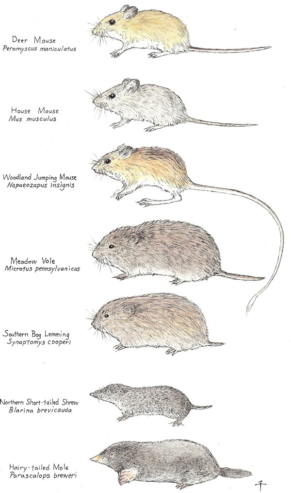 Need A Mouse Exterminator Indiana Tis The Season Mouse Pictures Rodents Facts About Mice