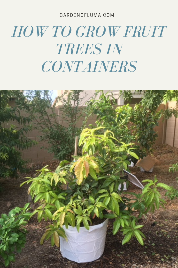 Grow Fruit Trees In Containers Growing Fruit Trees Potted Trees Fruit Trees In Containers
