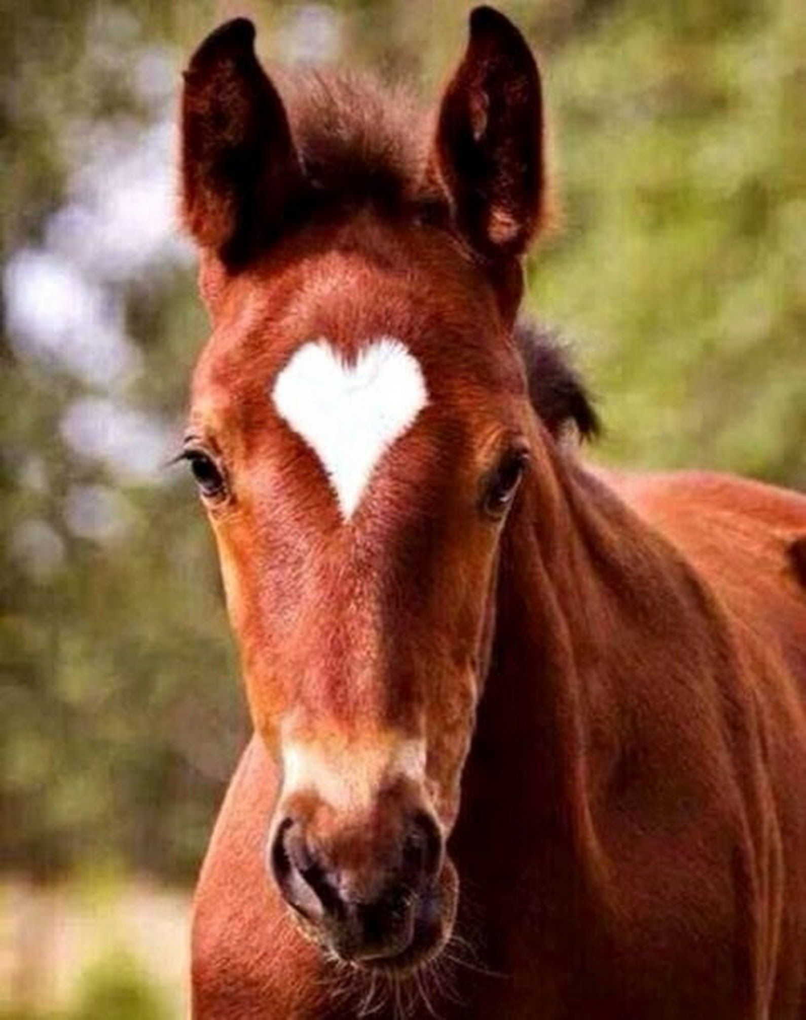 Картинка о лошадка