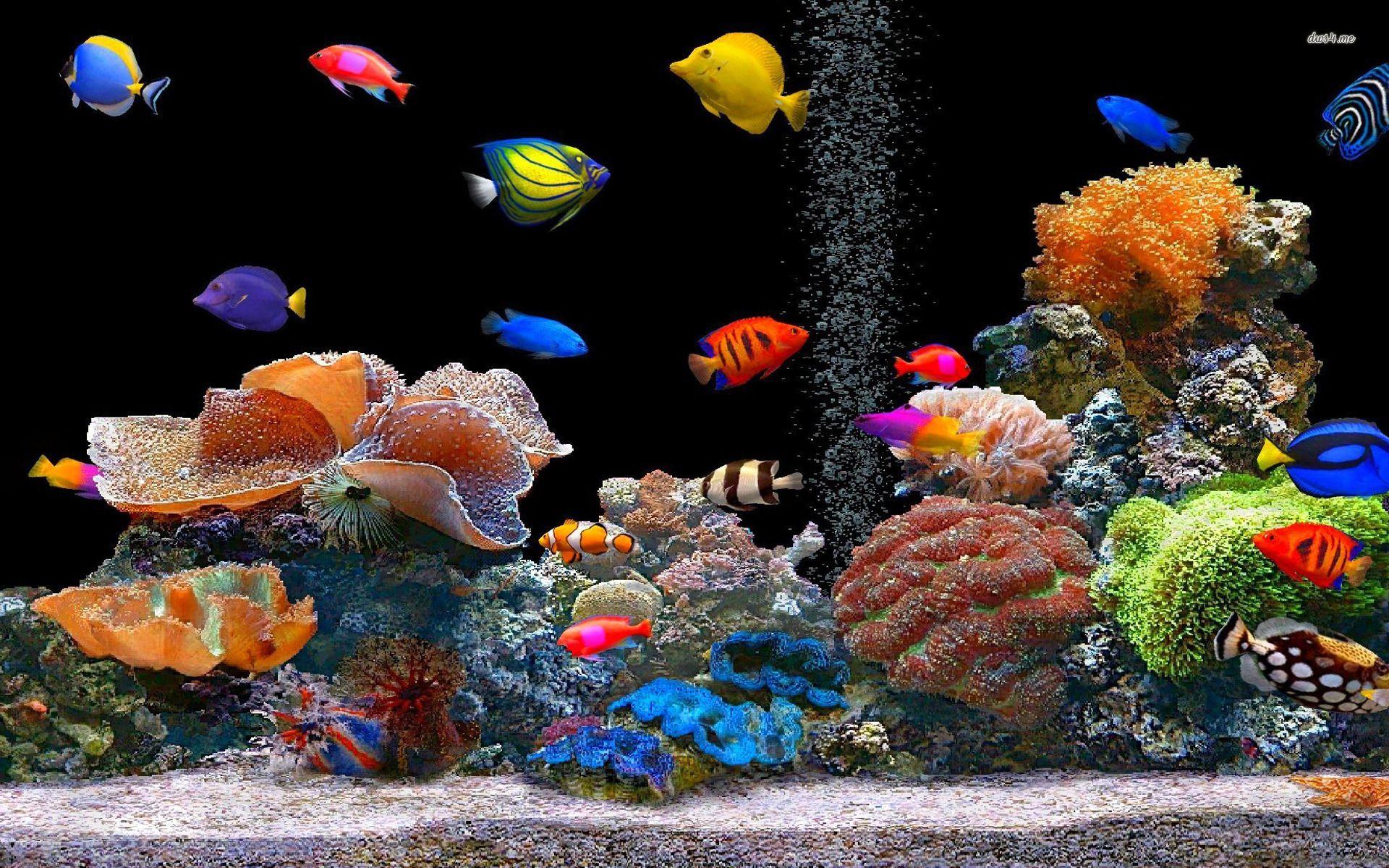 Peces de colores hd wallpaper gratis fondo de pantallas for Pagina de wallpapers hd