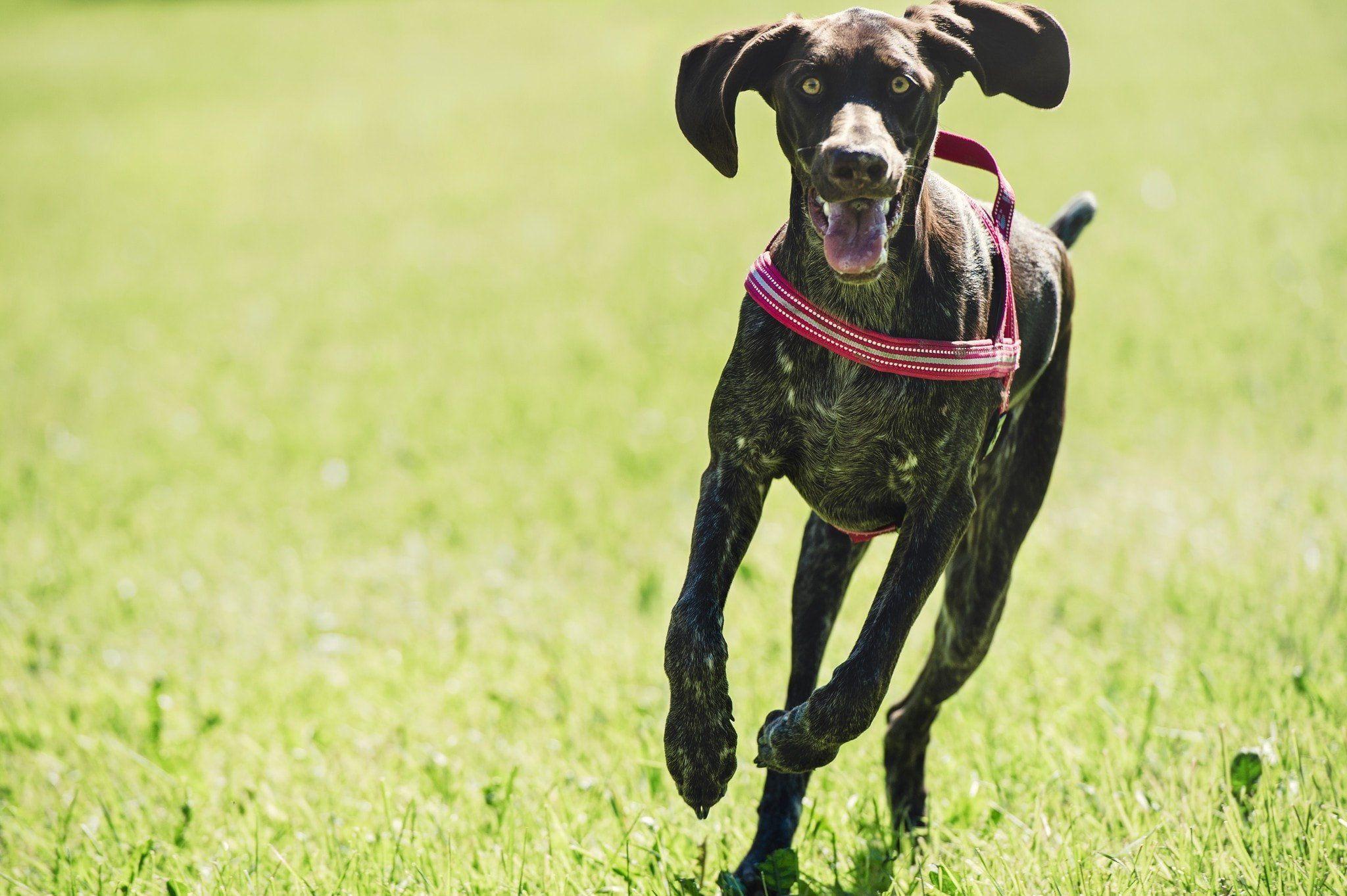 Hurtta Padded Dog Harness Skin Tags On Face Clear Skin Detox