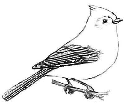 Tufted Titmouse Coloring And Facts Sheet Coloring Pages