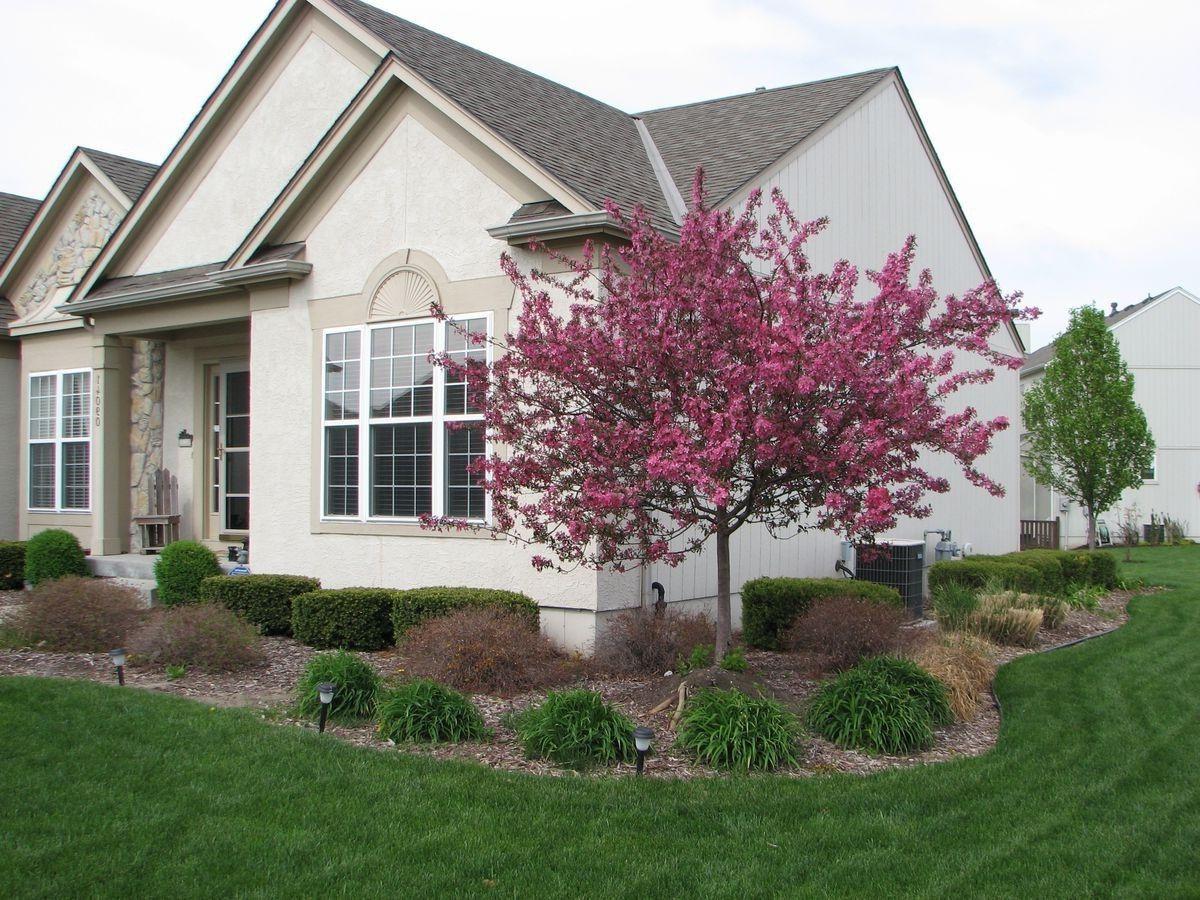 crepe myrtle gardening corner