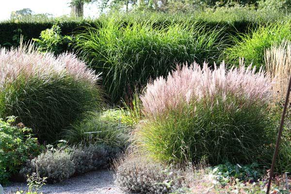 Prydgræs i flere varianter som her i haven