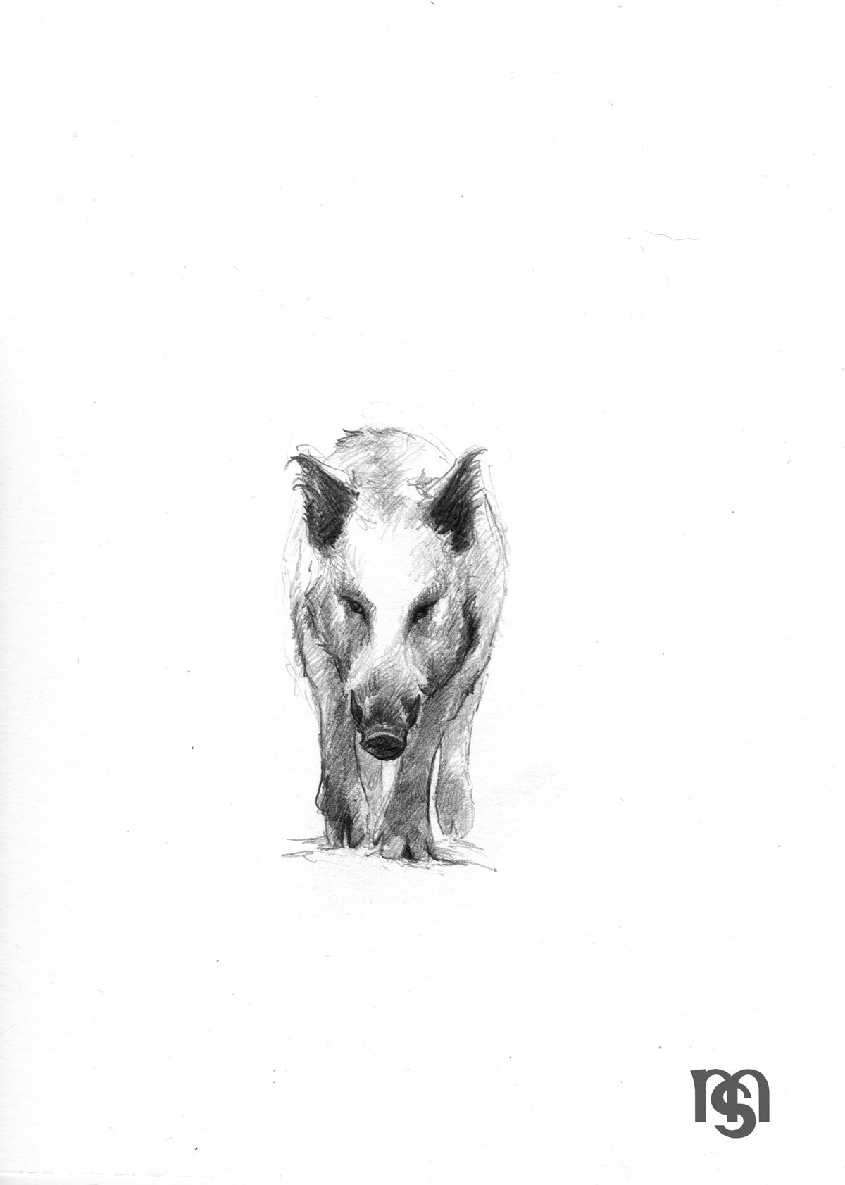 Wild Boar Boar Wildschwein