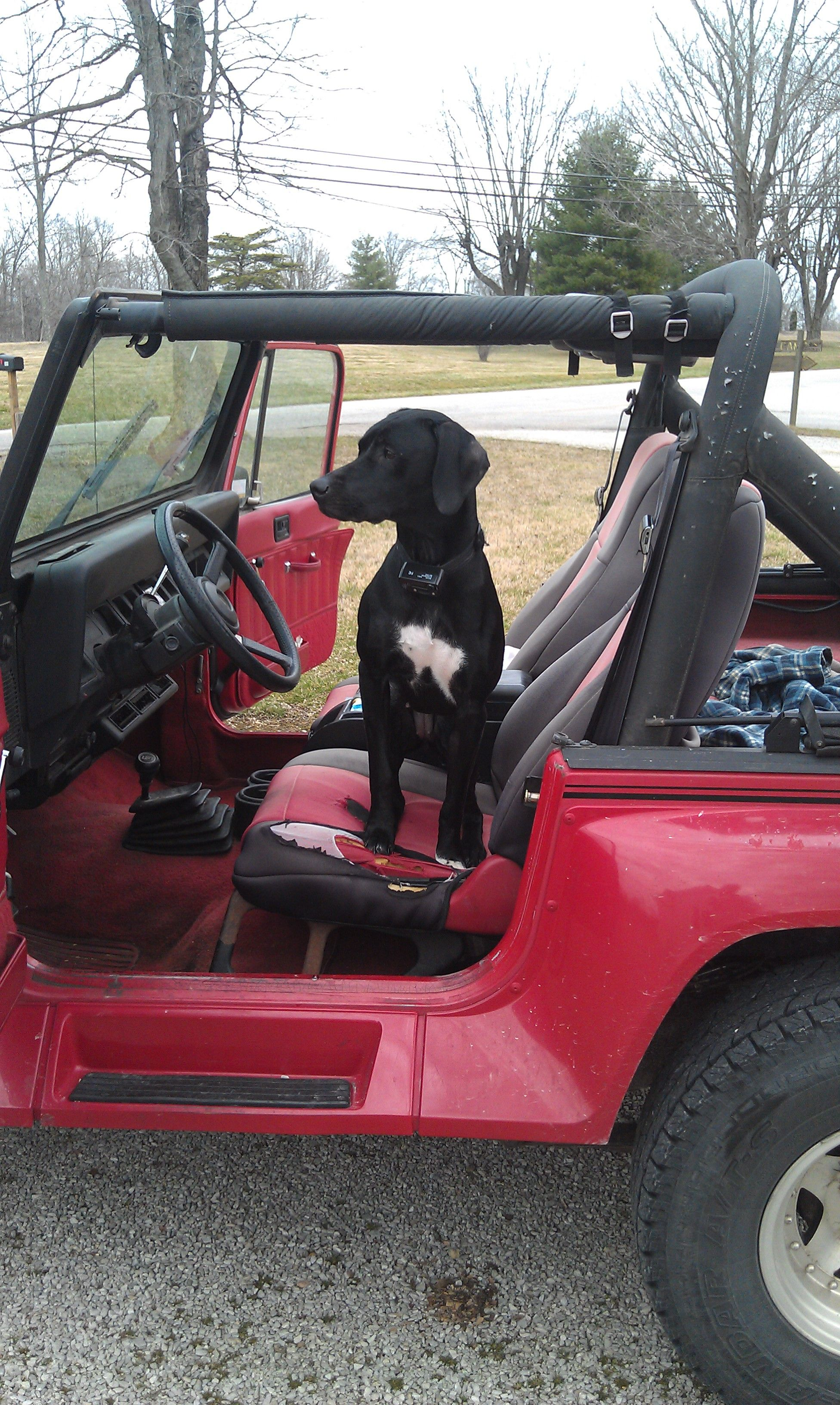 Take A Look About Jeep Dog Accessories with Captivating Gallery