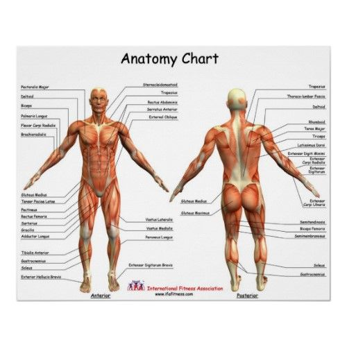IFA Anatomy Chart print and lots of links on anatomy   FBI Unit ...