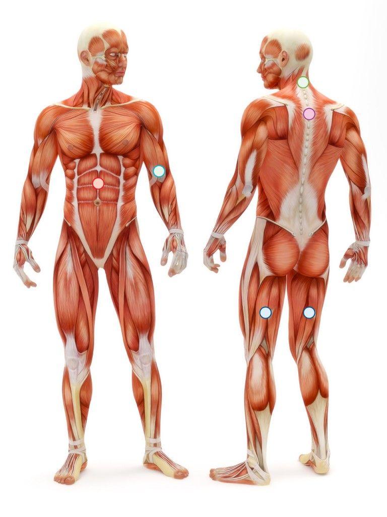 Mountain Pose Anatomy
