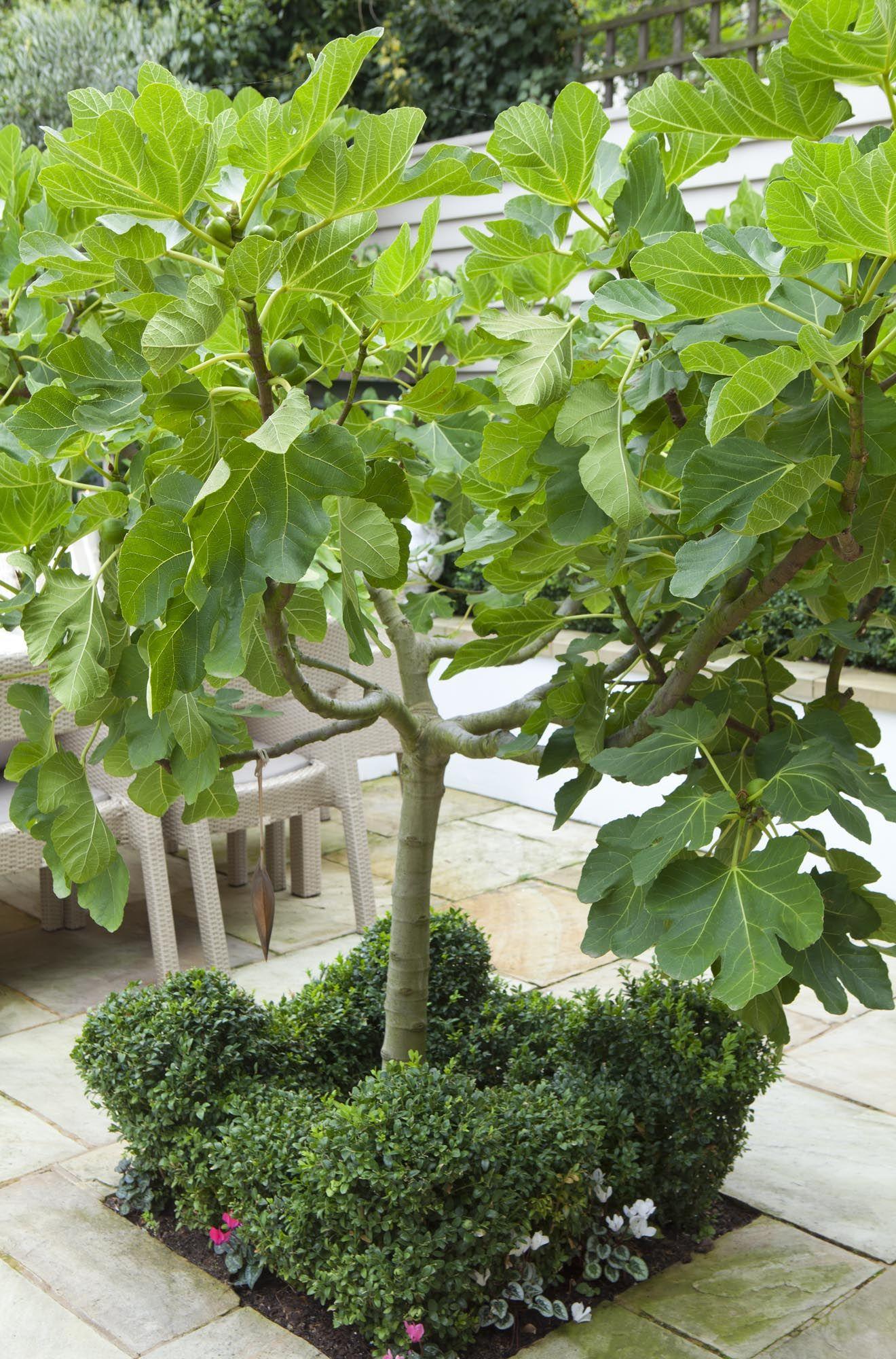 Claire Mee London Garden Designs Garden Trees Garden Shrubs Mediterranean Garden