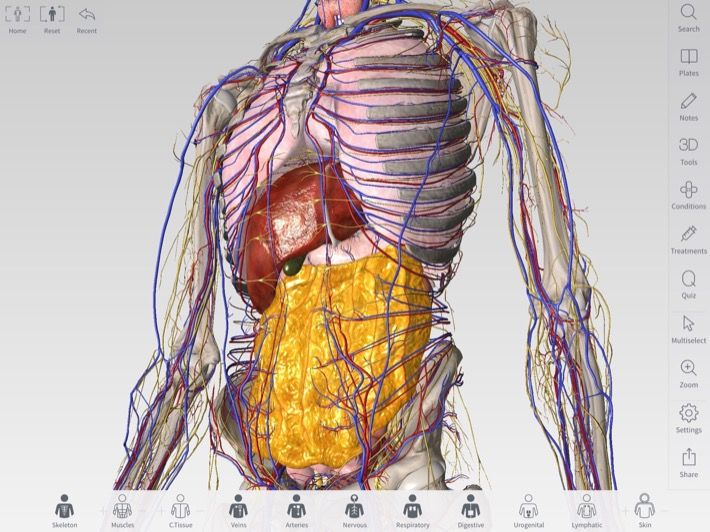 Screenshot Of Detailed Models In Complete Anatomy From 3d4medical
