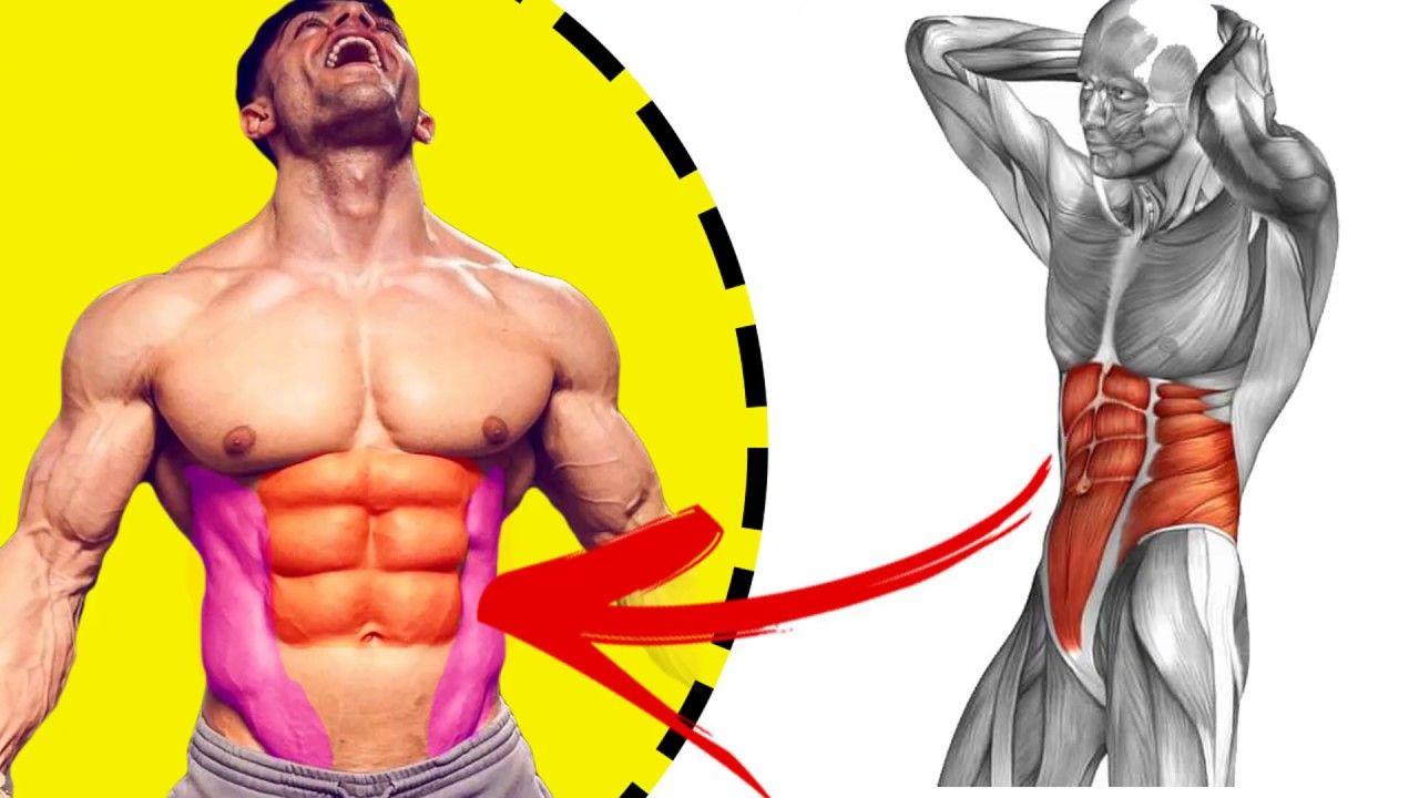 New Video By مهووس عضلات كمال الاجسام On Youtube عند الحديث عن اختفاء عضلات البطن فذلك لا يعني زوالها فهي موجودة ولا يمكن أن يعيش الإنسان من دونها وإنما المقصود