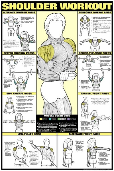 Bruce Algra Shoulder Workout Poster Presents The Most Effective Weight Training Exercises To Develop Deltoid Muscles For Men And Women