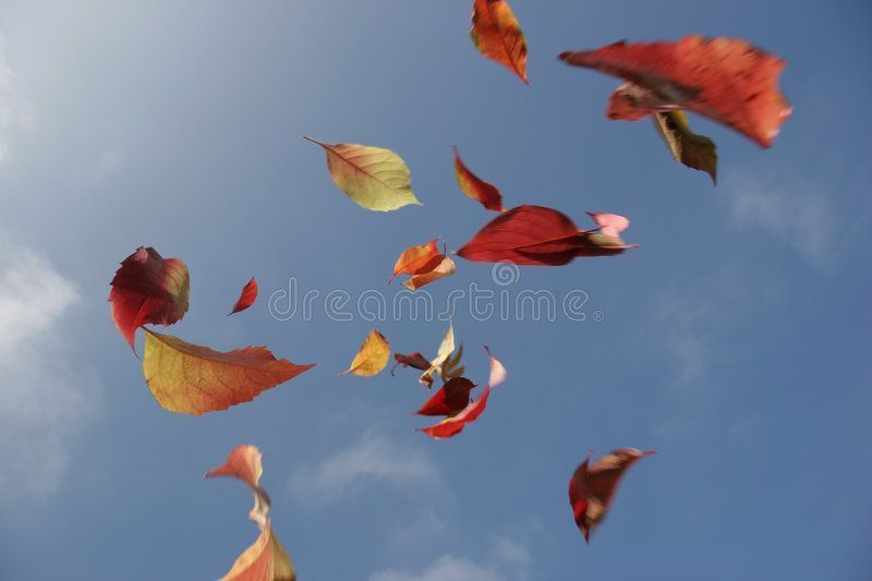 Autumn leaves. Colored leaves falling from the sky , #Ad, #leaves, #Autumn, #Colored, #sky, #falling #ad #autumnleavesfalling Autumn leaves. Colored leaves falling from the sky , #Ad, #leaves, #Autumn, #Colored, #sky, #falling #ad #autumnleavesfalling Autumn leaves. Colored leaves falling from the sky , #Ad, #leaves, #Autumn, #Colored, #sky, #falling #ad #autumnleavesfalling Autumn leaves. Colored leaves falling from the sky , #Ad, #leaves, #Autumn, #Colored, #sky, #falling #ad #autumnleavesfall #autumnleavesfalling
