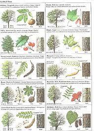 Image Result For Leaf Identification Poster Tree Identification Tree Leaf Identification Leaf Identification