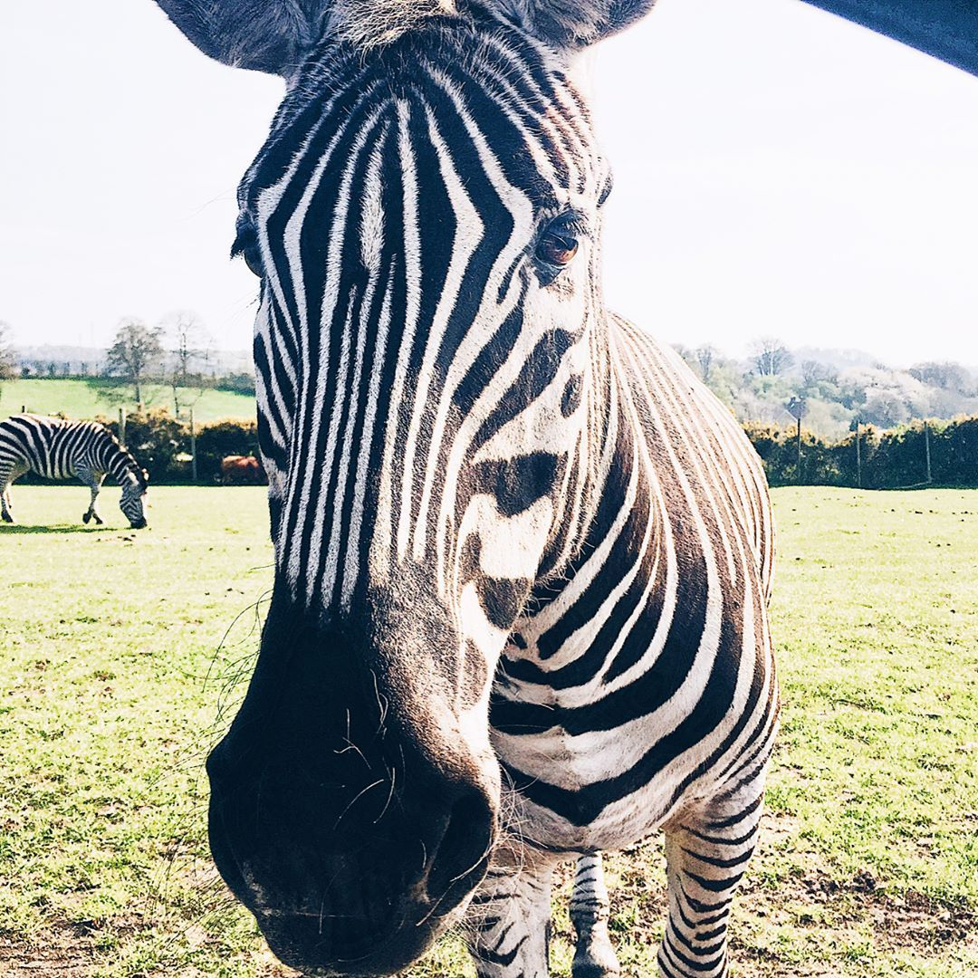 "32 Likes, 1 Comments - Wifey | Lifestyle  Blog | UK (@whatawife) on Instagram: ""🌵safari park🌵 This Sunday we spent in Safari Park , West Midlands ☀️Me & my hubby , we both felt…"""