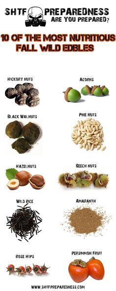 10 of the Most Nutritious Fall Wild Edibles   1. Hickory  2. Black Walnut  3. Pine Nuts  4. Hazelnut  5. Beech Nuts  6. Acorn  7. Wild Rice  8. Amaranth  9. Rose Hips  10. Persimmon