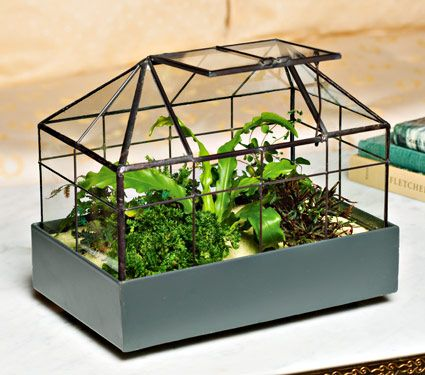 victorian conservatory terrarium kit great gift from white. Black Bedroom Furniture Sets. Home Design Ideas
