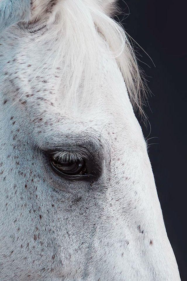 Mai avuto un cavallo grigio...