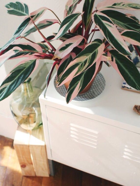 Pink Green Leaves And House Plants