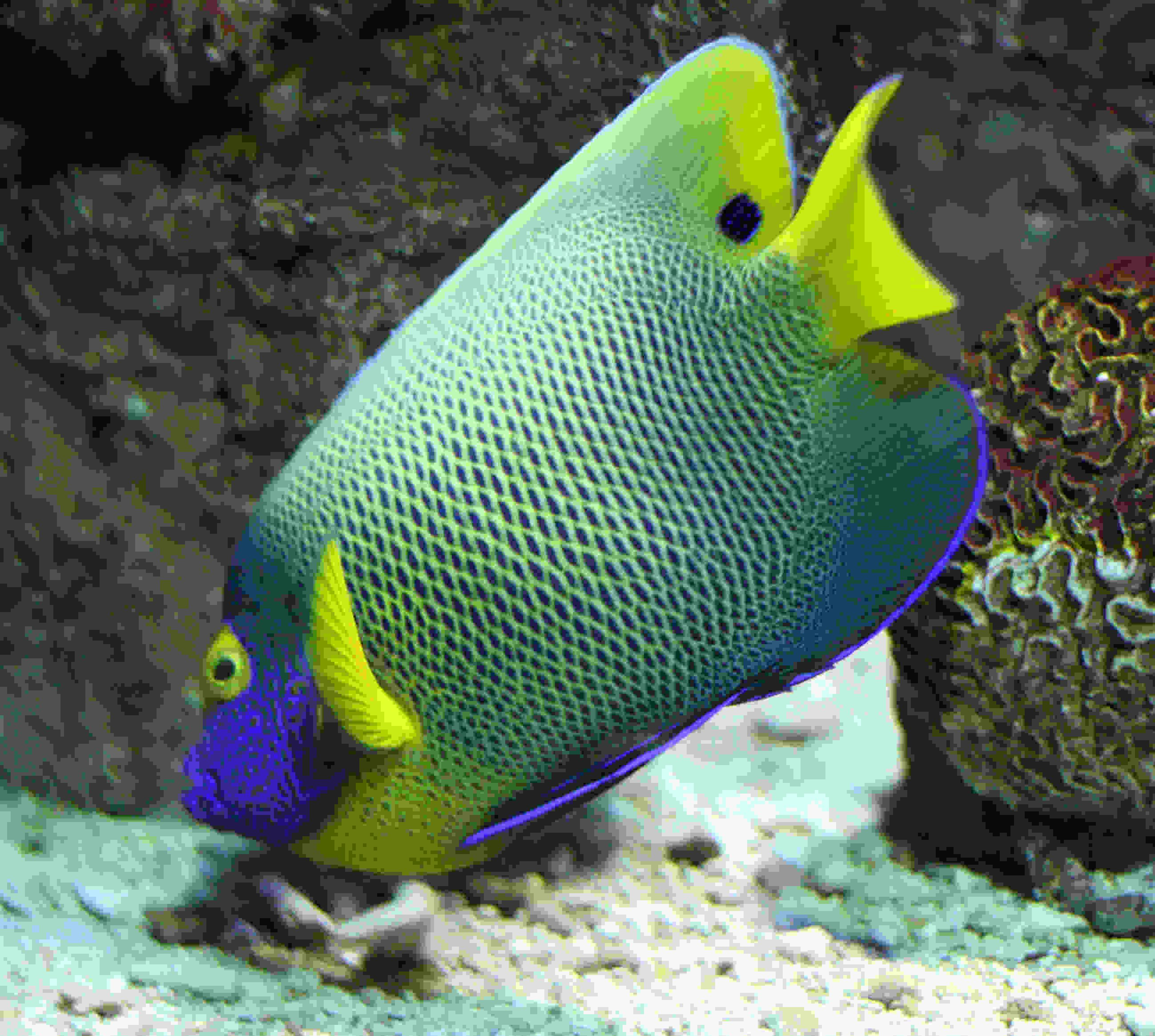 Coloured fish movement though the water splashing for Exotic saltwater fish